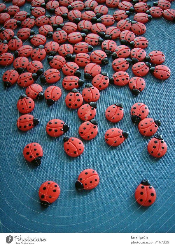 Käfertreffen Farbfoto Gedeckte Farben Studioaufnahme Nahaufnahme Menschenleer Hintergrund neutral Tier Marienkäfer Tiergruppe schön grau rot schwarz