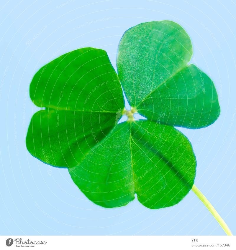 Ich hab meinen Glücksklee verloren! Natur grün blau Pflanze Leben Gefühle Frühling Glück Umwelt Erfolg frisch Hoffnung Fröhlichkeit Kitsch Zeichen Symbole & Metaphern