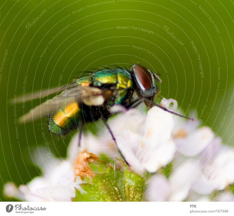 Come Fly away! Natur grün Pflanze Sommer Blume Tier Ernährung Blüte Fliege fliegen Wandel & Veränderung Flügel Vergänglichkeit Neugier Blühend Jagd