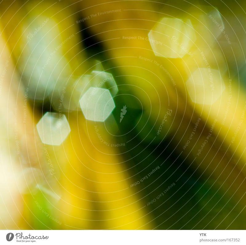 Licht und Schatten (und Das was dazwischen ist) Natur grün Sommer gelb Farbe dunkel Wärme Stimmung braun glänzend Design Umwelt ästhetisch einfach einzigartig