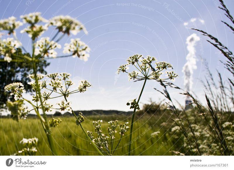 Industrie nebenan Natur Himmel weiß Sonne grün blau Pflanze Sommer Wolken Wiese Gras Feld Elektrizität Umwelt Energiewirtschaft