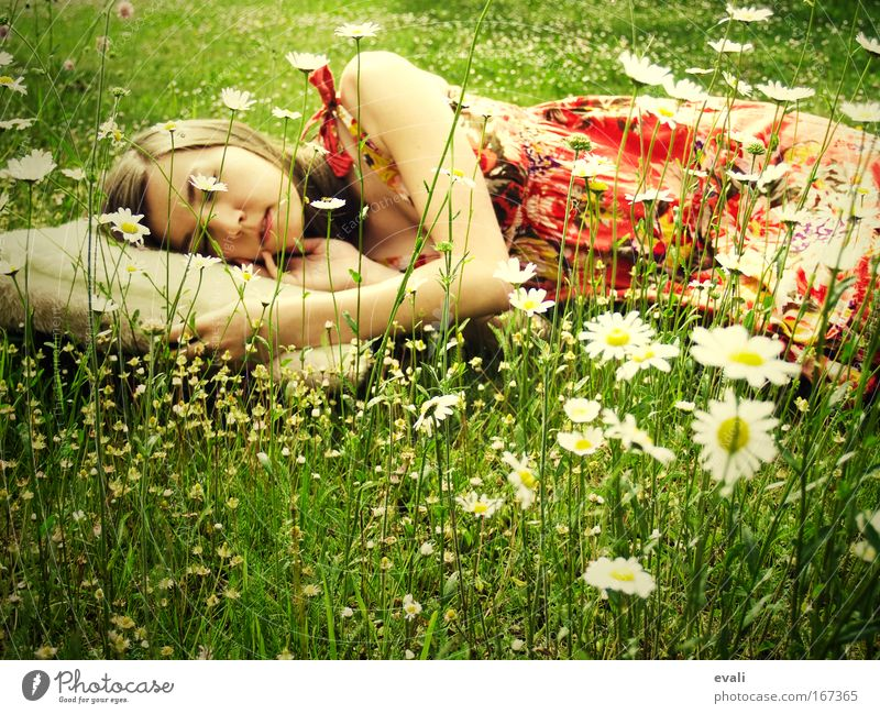 Recreation Mensch Jugendliche grün Sommer Erholung Wiese Frau feminin Frühling Kopf Blume Arme schlafen Margerite Polster Junge Frau