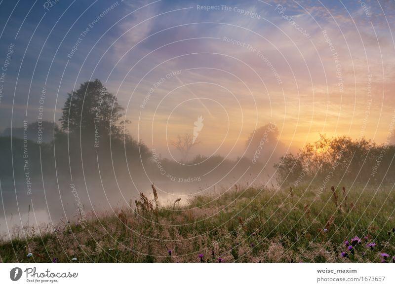 Nebelhafter Morgen auf dem Fluss. Sommer Himmel Natur Ferien & Urlaub & Reisen Pflanze schön grün Sonne Baum Blume Landschaft Wolken Wald Umwelt gelb Blüte