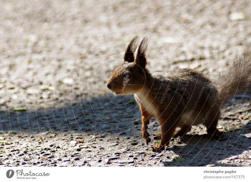 Der Eichhörnchen-Effekt Farbfoto Außenaufnahme Tag Schatten Froschperspektive Landschaft Wildtier Fell Krallen Pfote 1 Tier füttern warten Fröhlichkeit Neugier