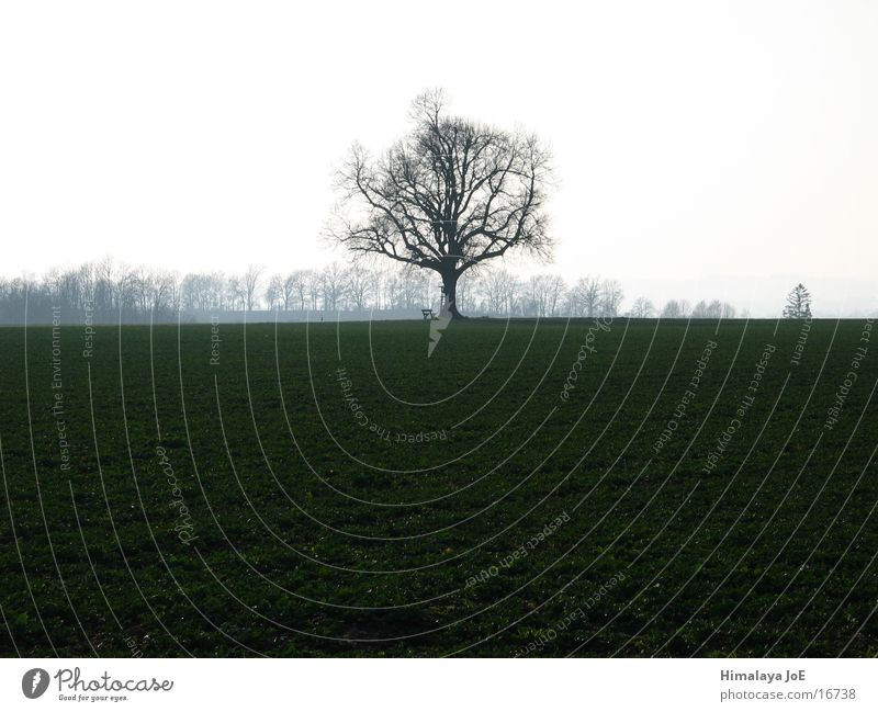 freistehender Baum Baum Ferne Landschaft Graffiti einzeln