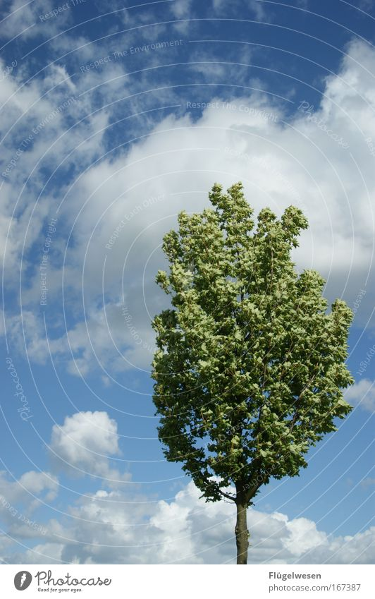 1. Stunde in der Baumschule: Gerade stehen! Farbfoto Außenaufnahme Umwelt Natur Landschaft Pflanze Himmel Wolken Klima Park Erholung verblüht Freundlichkeit