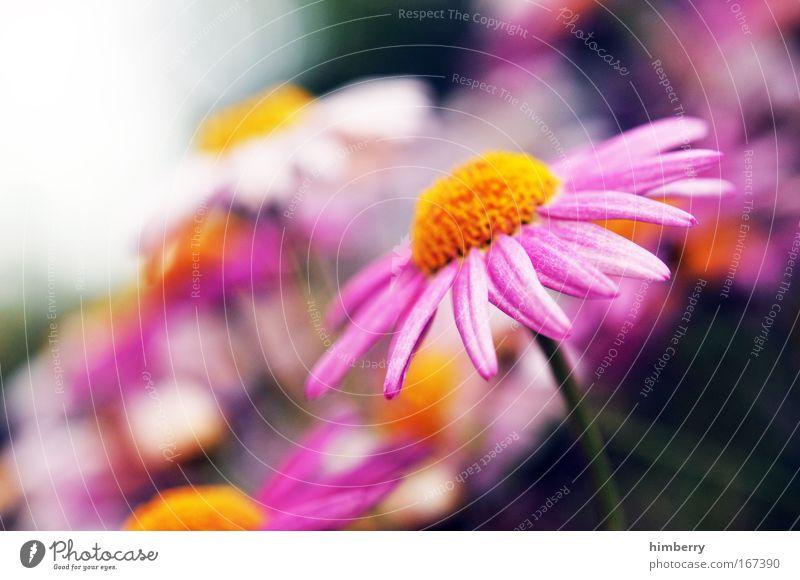teletom magenta Natur schön Blume Pflanze Freude ruhig Leben Erholung Wiese Stil Blüte Park Zufriedenheit rosa Design Lifestyle