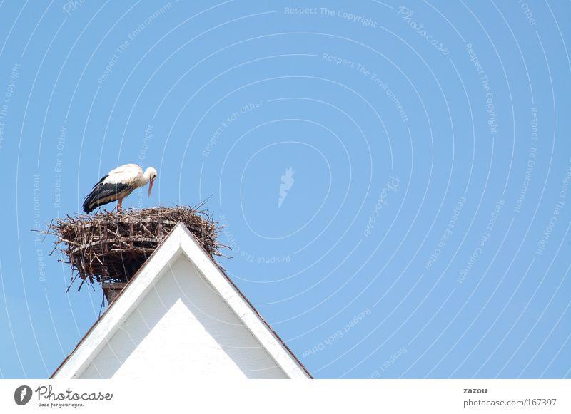 Baby an Bord Farbfoto Außenaufnahme Textfreiraum rechts Textfreiraum oben Tag Tierporträt Himmel Wolkenloser Himmel Dach Wildtier Vogel 1 füttern Blick Storch