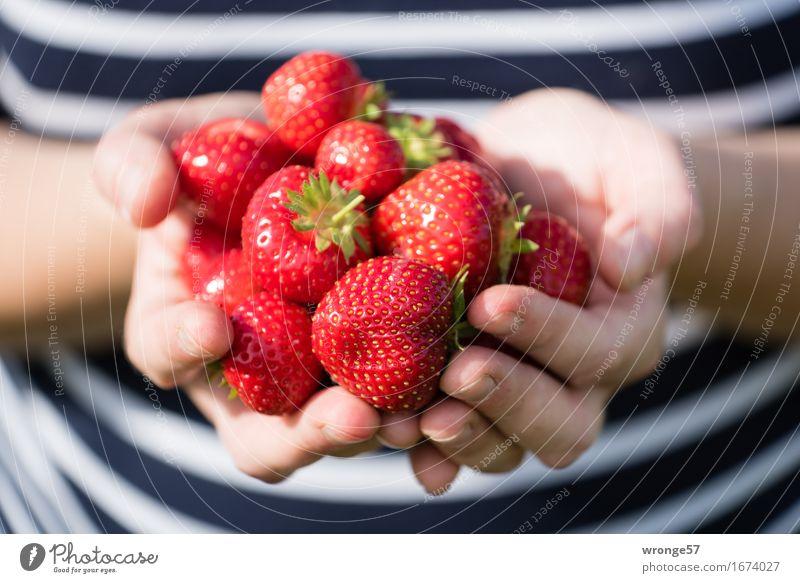 Erntefrisch Lebensmittel Frucht Erdbeeren Vegetarische Ernährung Mensch feminin Junge Frau Jugendliche Erwachsene Körper Arme Bauch 1 tragen Gesundheit groß