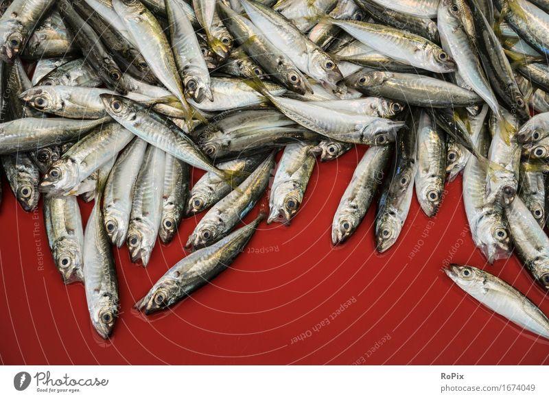 Sardinen Natur Gesunde Ernährung rot Tier Umwelt Gesundheit Lebensmittel Stimmung frisch Ernährung ästhetisch genießen Lebensfreude kaufen nass Fisch