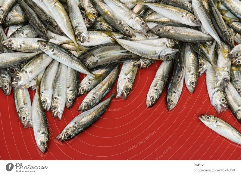 sardines Lebensmittel Fisch Meeresfrüchte Ernährung Diät Koch Wirtschaft Handel Handwerk Umwelt Natur Wasser Schuppen Sardinien Schwarm ästhetisch authentisch