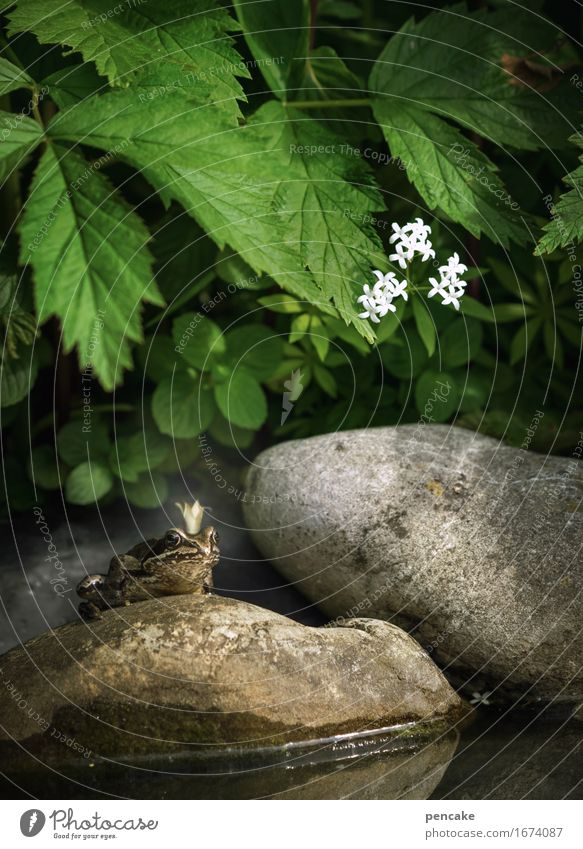 ungeküsst Natur Urelemente Wasser Sommer Pflanze Blatt Blüte Teich Tier Frosch 1 Zeichen Bekanntheit Ekel Erfolg historisch kalt listig nass klug schleimig
