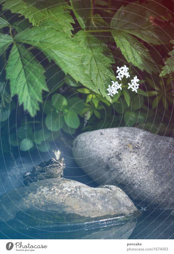 träum weiter Kunst Pflanze Teich Tier Frosch 1 Zeichen Bekanntheit Ekel kalt Idylle Kultur Nostalgie planen Vergangenheit Stein Blüte König Krone Märchen