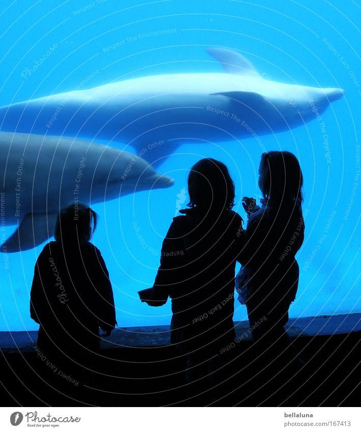 Zwei Welten treffen aufeinander. Tier Wildtier Aquarium 2 Tierpaar Wasser Gefühle Stimmung Freude Glück Lebensfreude Freundschaft Zusammensein Tierliebe