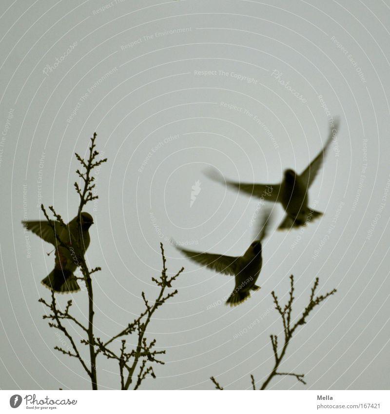 Up and away Natur Himmel Baum Winter Tier Leben dunkel Herbst Bewegung Freiheit grau Luft Zusammensein Vogel Umwelt fliegen