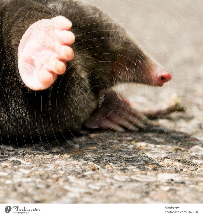 please help me Tier Leben klein Traurigkeit Kraft Wildtier außergewöhnlich niedlich Schutz nah Schmerz Mut Zukunftsangst Verzweiflung kuschlig Sorge