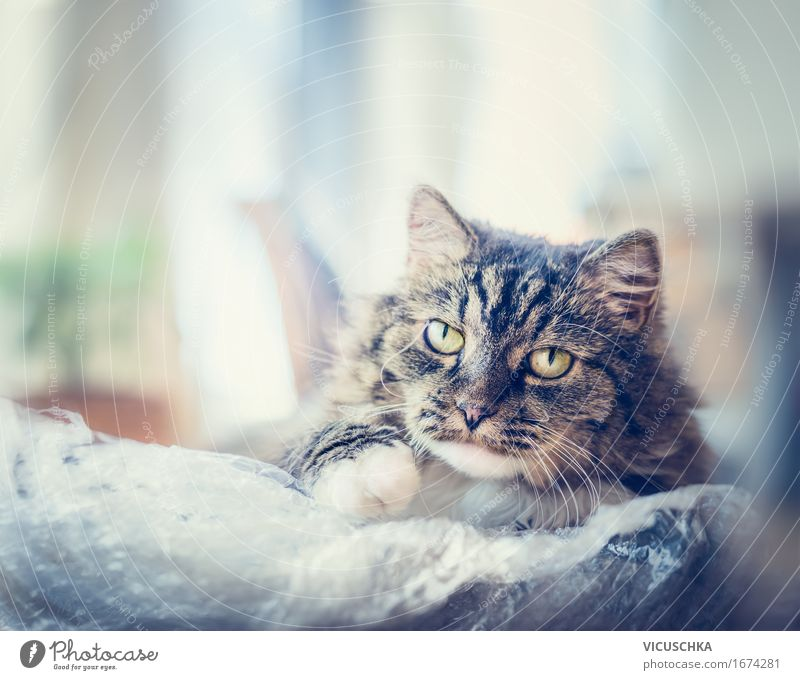 Charismatische Katze mit einer Plastiktüte Natur Ferien & Urlaub & Reisen Tier Freude Auge Gefühle Lifestyle Spielen Freiheit Freundschaft Häusliches Leben