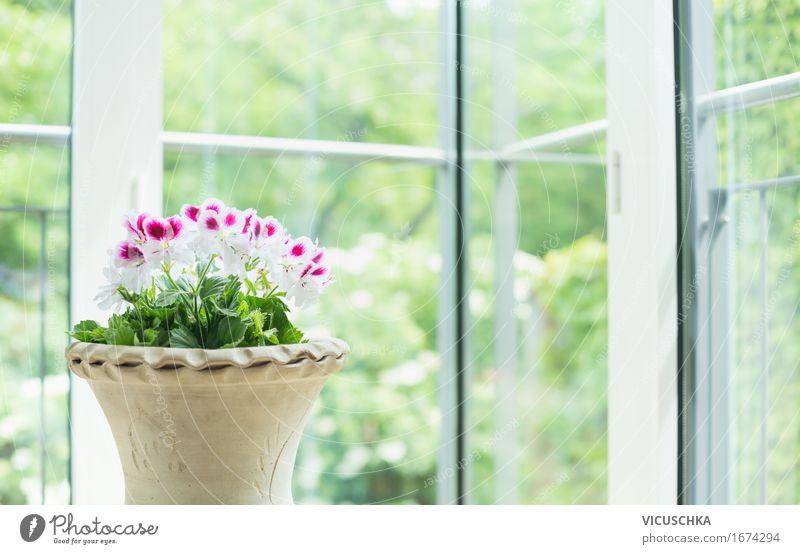 Terrakotta Blumentopf mit Geranien am Fenster Sommer schön grün Haus Innenarchitektur Stil Garten Design Wohnung Häusliches Leben Dekoration & Verzierung