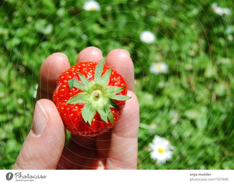 Natur grün Hand Sommer rot Sonne Gras Essen Park Frucht Lebensmittel frisch Finger Schönes Wetter bedrohlich genießen