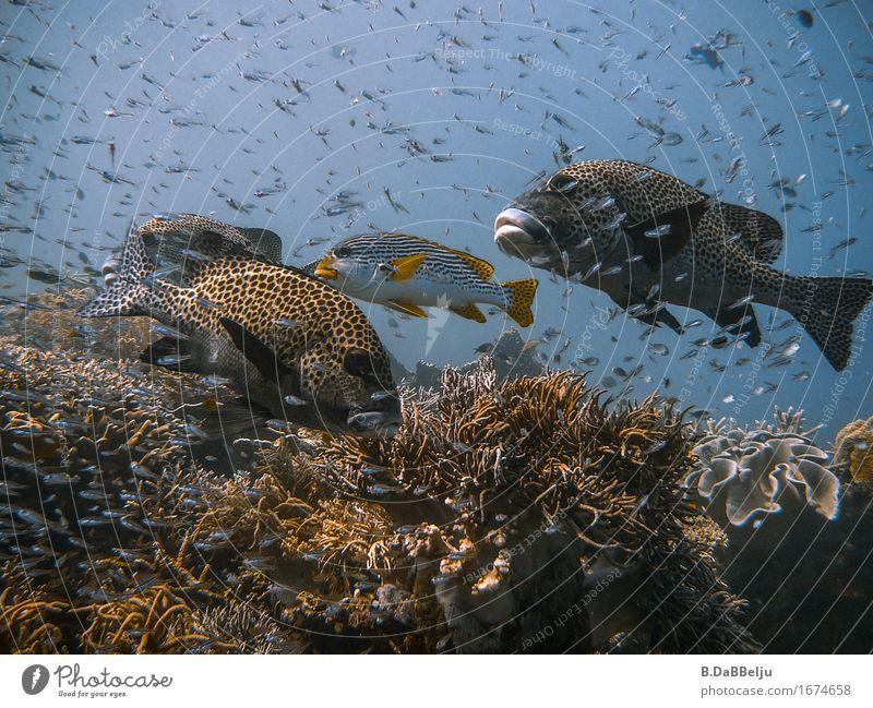 Unterwasser Natur Ferien & Urlaub & Reisen Wasser Meer Tier Ferne wild frei Wildtier Fröhlichkeit Fisch tauchen Anhäufung Schwarm Expedition Korallen