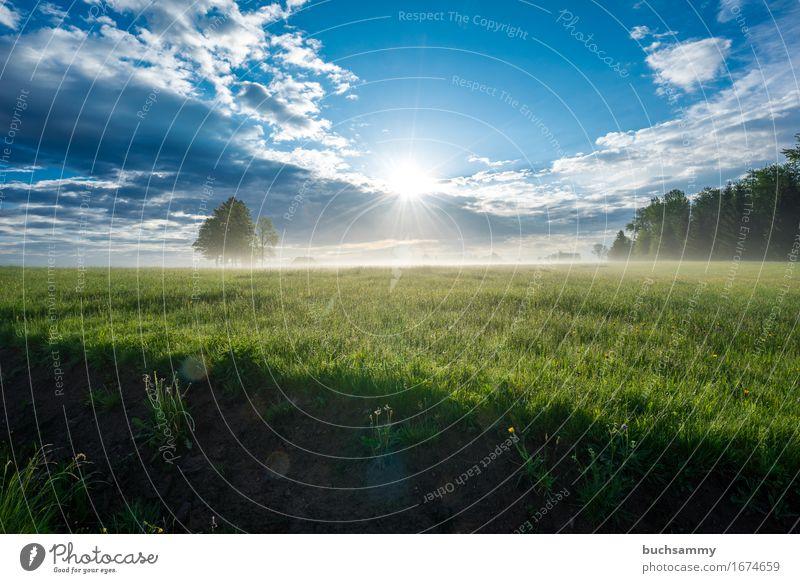 Sonnenaufgang im Schwarzwald Himmel Natur Ferien & Urlaub & Reisen Pflanze Sonne Landschaft Erholung Wolken Tier Frühling Deutschland Tourismus Wetter Freizeit & Hobby wandern Ausflug