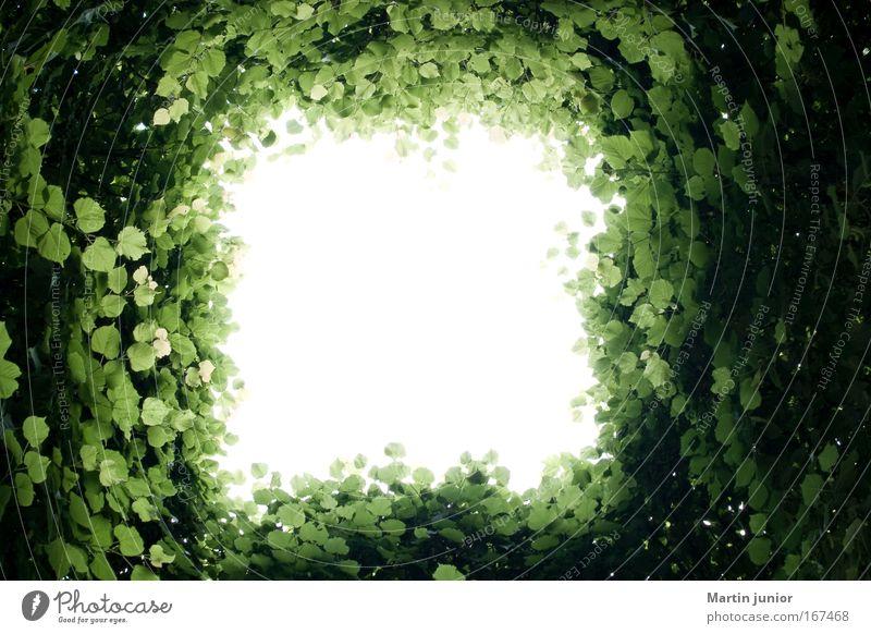 Licht am Ende des Blätterwaldes Farbfoto Außenaufnahme Muster Strukturen & Formen Menschenleer Textfreiraum Mitte Tag Schatten Kontrast Sonnenlicht Gegenlicht