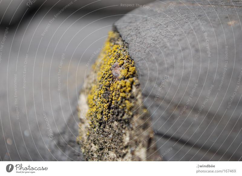 Raues grau Natur alt Pflanze schwarz Einsamkeit Haus gelb grau Stein Frühling trist Dach Pilz vergessen schlechtes Wetter Flechten