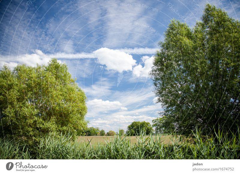 sommer. ruhig Duft Ferne Sommer Umwelt Natur Landschaft Pflanze Himmel Wolken Horizont Sonne Sonnenlicht Schönes Wetter Baum Sträucher Wiese Feld natürlich blau