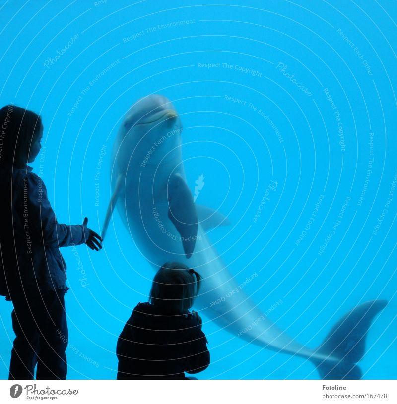 Reich mir die Flosse! Mensch Natur blau Wasser schön Mädchen Meer Tier schwarz Umwelt Spielen grau Wellen Schwimmen & Baden Geschwindigkeit ästhetisch