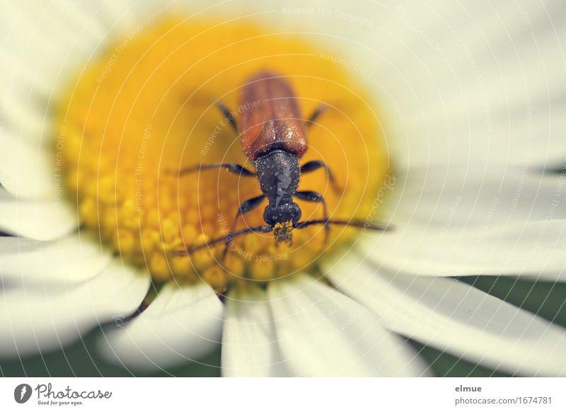 Karl im Paradies Natur Pflanze Sommer Sonne Tier Umwelt gelb Leben Blüte Glück klein Freiheit Design Zufriedenheit frei beobachten