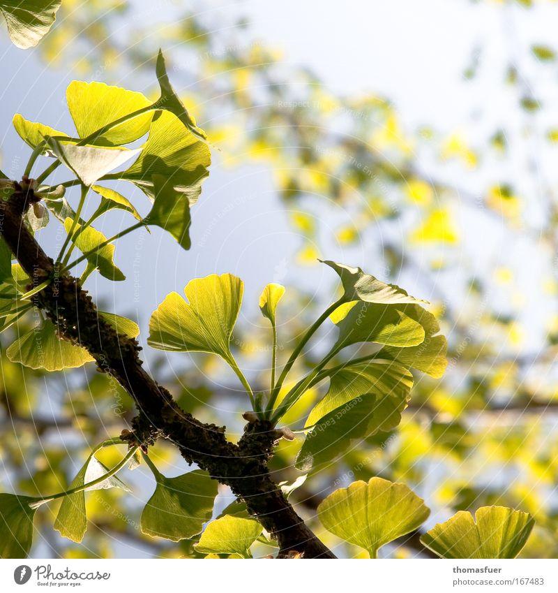 Frühlingsromance Natur Baum grün ruhig Blatt Tier gelb Frühling Kraft Frieden Lebensfreude geheimnisvoll exotisch Ausdauer standhaft