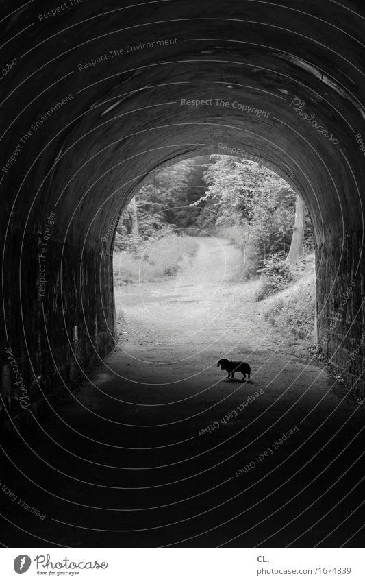 im tunnel Wald Tunnel Wege & Pfade Tier Haustier Hund Dackel 1 gehen dunkel Ziel Spaziergang Spazierweg Flucht Schwarzweißfoto Außenaufnahme Menschenleer
