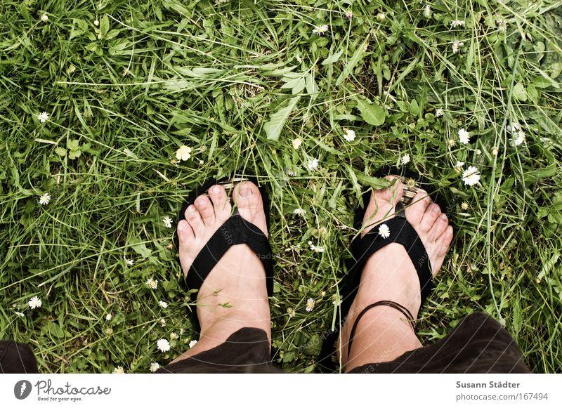 Sonne an?FlipFlops an! Mensch Pflanze Sommer Tier Blatt Landschaft Wiese feminin Wärme Garten Beine Fuß Park Erde Haut