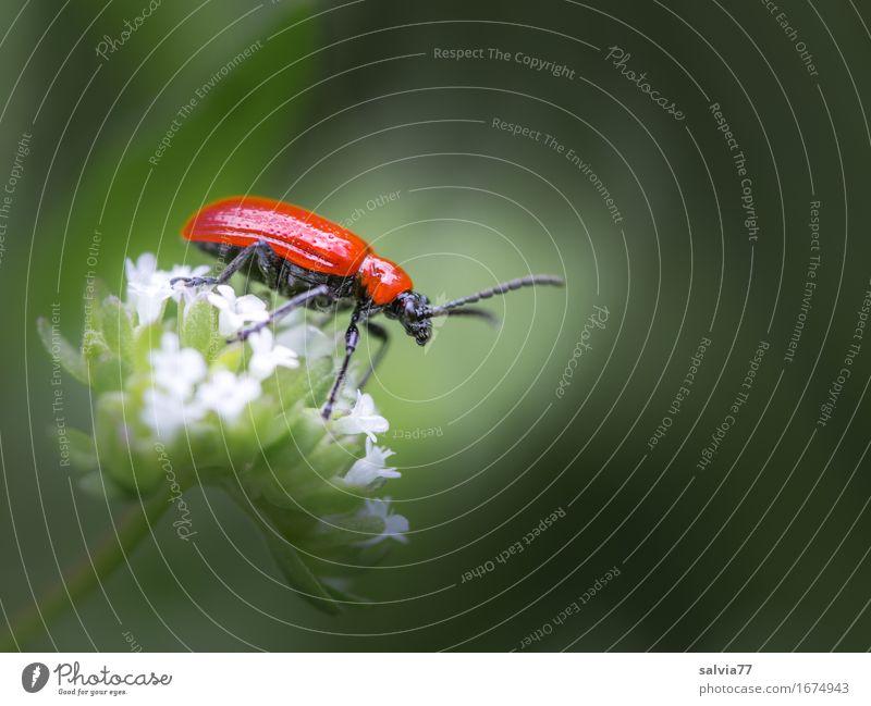 leuchtend rot Natur Pflanze Sommer Farbe Tier Blüte Frühling Glück Garten grau glänzend Wildtier genießen Lebensfreude