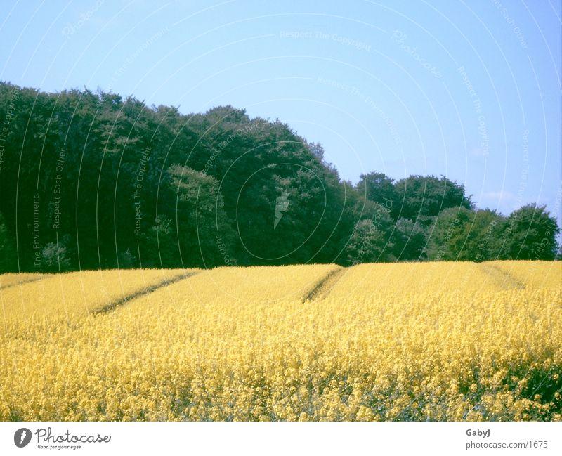 Raps-ody Landwirtschaft Rapsfeld Sommer gelb prächtig Feld Rapsöl Schleswig-Holstein Himmel Furche hüttener berge Linie sky bauen