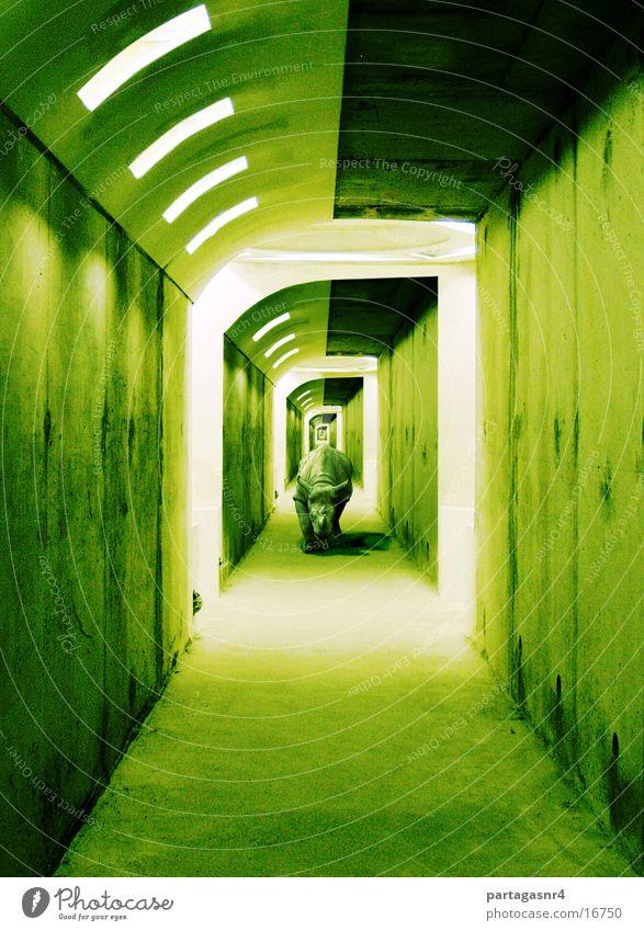 Rhino_im_Gang Zentralperspektive Neonlicht
