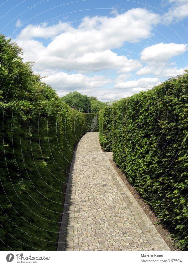 als wir wiederum nicht wussten ... Himmel Wege & Pfade Park Perspektive Zukunft Sträucher Glaube gruselig Burg oder Schloss entdecken Mut Stress Platzangst