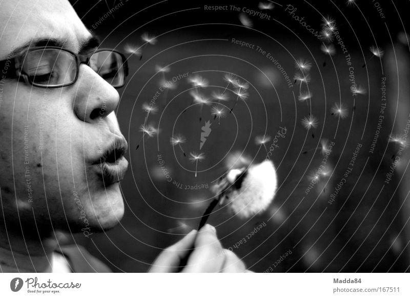 Pusteblume Schwarzweißfoto Außenaufnahme Nahaufnahme Makroaufnahme Textfreiraum rechts Textfreiraum oben Tag Kontrast Sonnenlicht Schwache Tiefenschärfe