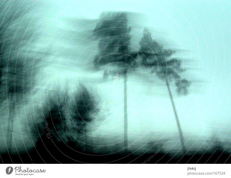 Speed Natur Himmel Baum Pflanze Ferien & Urlaub & Reisen Wald Landschaft Umwelt Horizont Geschwindigkeit Hügel Surrealismus Wolkenloser Himmel