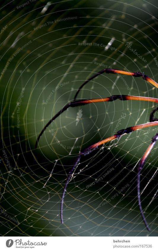 das paradies kann auch anders Baum Beine Angst laufen gefährlich Insel Sträucher schreien Todesangst Panik Spinne Gift krabbeln Entsetzen Schock Spinnennetz