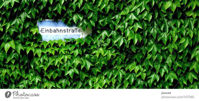 Einbahnstraße grün Blatt Straße Wand Frühling Mauer Metall Zukunft fahren Partnerschaft Autofahren Schirm Schutz Efeu Verkehrsschild Verkehrszeichen