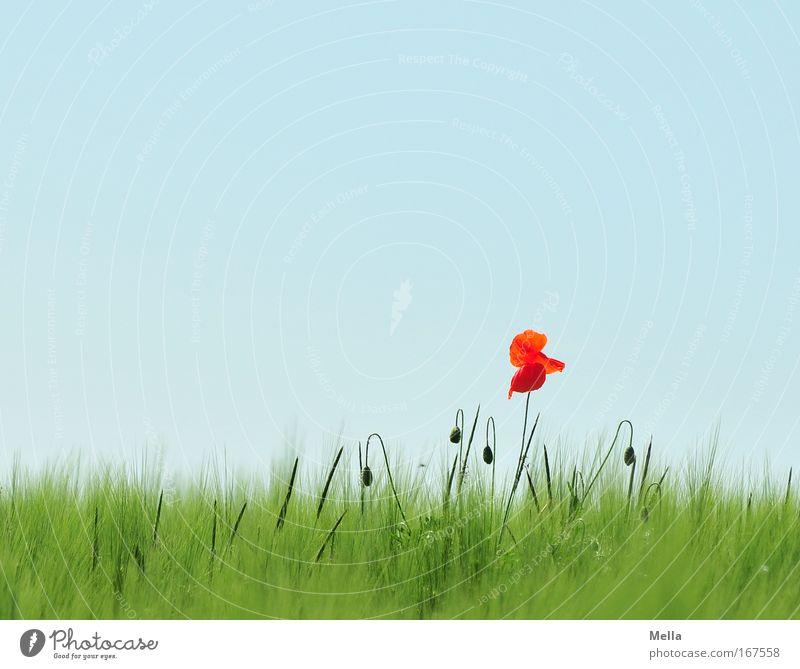 Herausragend Farbfoto mehrfarbig Außenaufnahme Menschenleer Textfreiraum oben Tag Totale Umwelt Natur Landschaft Pflanze Wolkenloser Himmel Frühling Sommer