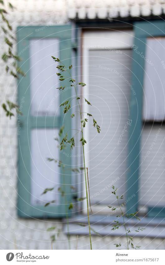 AST 9 | Aufstehn - Rasen Mähn! Gras Halm Dorf Kleinstadt Haus Altbau Fassade Fenster Jalousie Fensterladen Vorgarten Wachstum hoch grau grün türkis Nostalgie