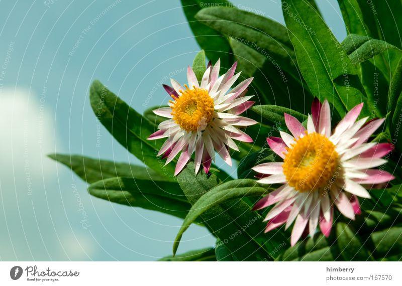 tag team Natur schön Himmel Blume Pflanze ruhig Wolken Erholung Stil Blüte Park Zufriedenheit Design Umwelt frisch ästhetisch