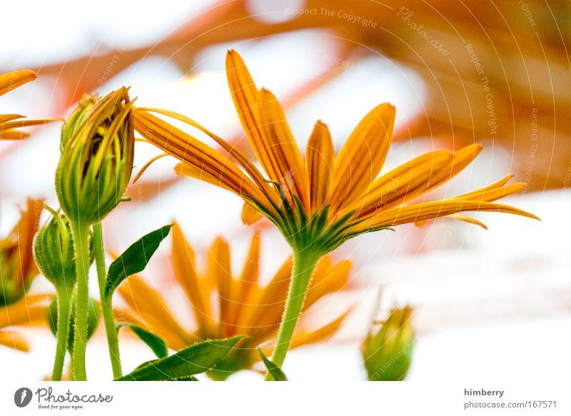 sunny summer Natur schön Blume Pflanze ruhig gelb Leben Erholung Stil Blüte Park Zufriedenheit Design gold frisch ästhetisch