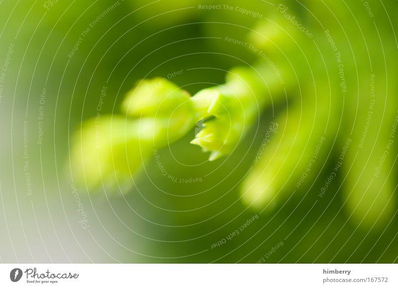 waldmeisterry Natur Pflanze Sommer Umwelt Leben Frühling Gesundheit natürlich frisch Tanne Duft positiv Umweltschutz Umweltverschmutzung Trieb Sauerstoff