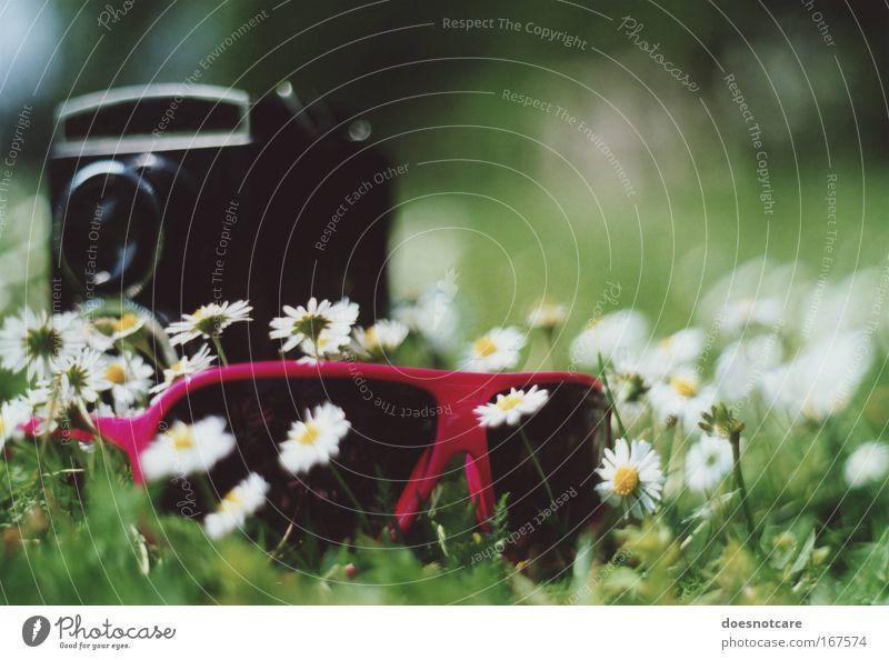 Selbstportrait. Blume grün Pflanze Sommer schwarz Erholung Wiese Stil Blüte rosa Lifestyle Brille Coolness Freizeit & Hobby Fotokamera einzigartig