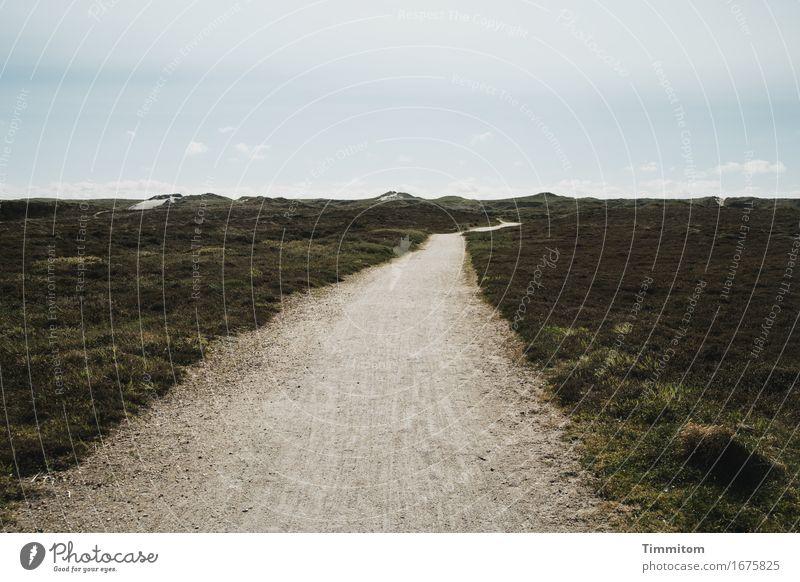Wir gehen dahin. Ferien & Urlaub & Reisen Umwelt Natur Landschaft Himmel Schönes Wetter Düne Dänemark Wege & Pfade Blick ästhetisch natürlich Ziel Ferne Sand