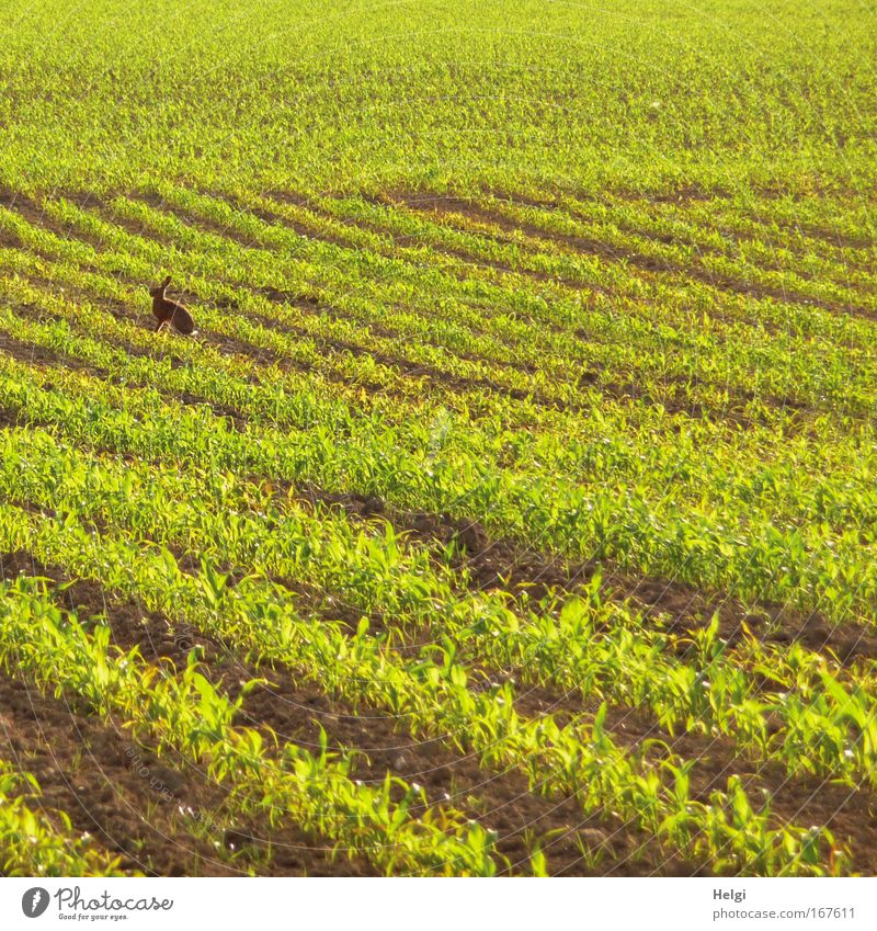 ich bin schon da.... Natur grün Pflanze ruhig Einsamkeit Tier Leben Frühling Landschaft braun Feld klein Umwelt Geschwindigkeit sitzen ästhetisch