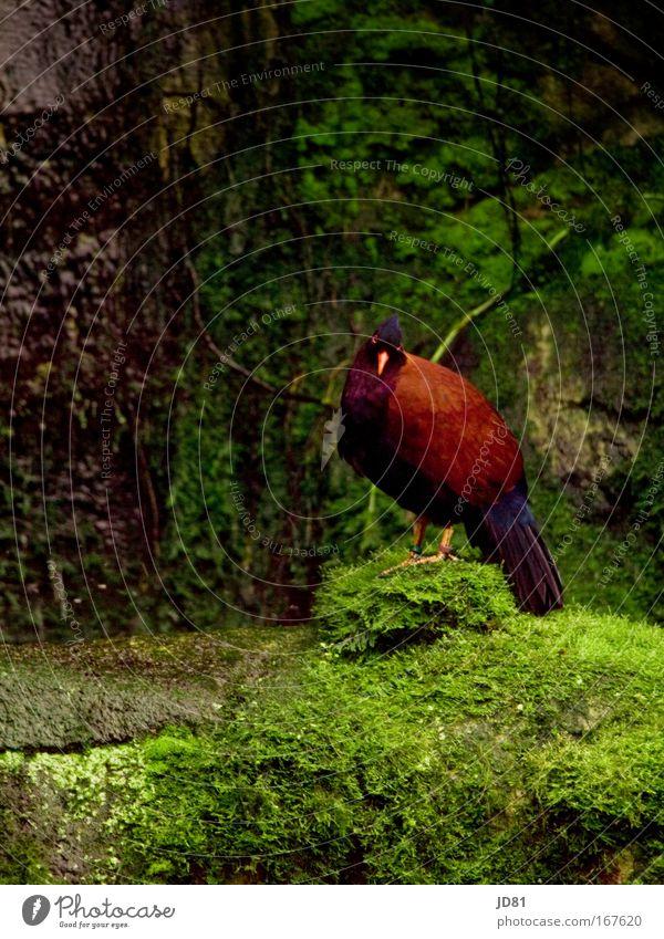 Was guckst du so Farbfoto mehrfarbig Außenaufnahme Tag Kontrast Blick in die Kamera Zoo Natur exotisch Felsen Tier Wildtier Vogel Flügel 1 hören ästhetisch grün